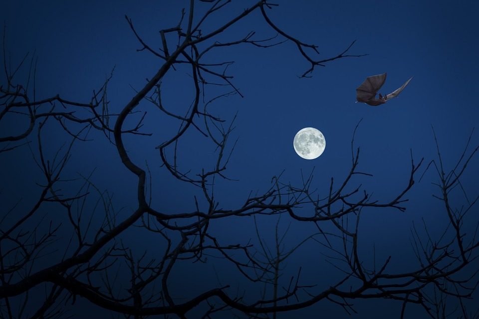 Full Moon, Night, Bat, Dark, Halloween, Darkness