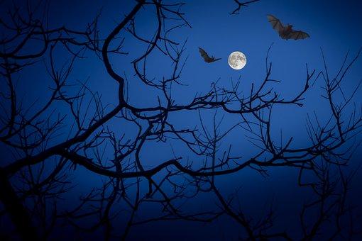 Pleine Lune, Nuit, Les Chauves-Souris