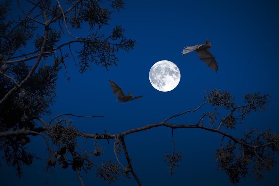 full-moon-3659317_960_720