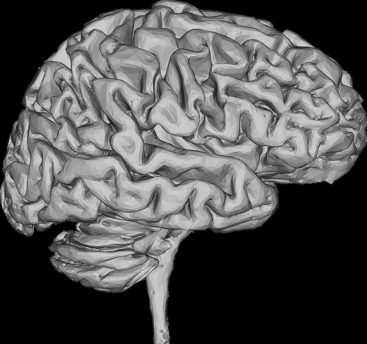 Второй мозг картинки