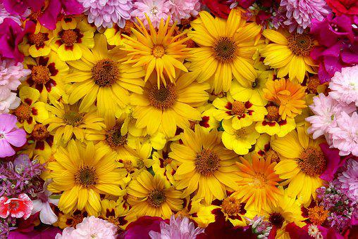 flower arrangement images pixabay download free pictures
