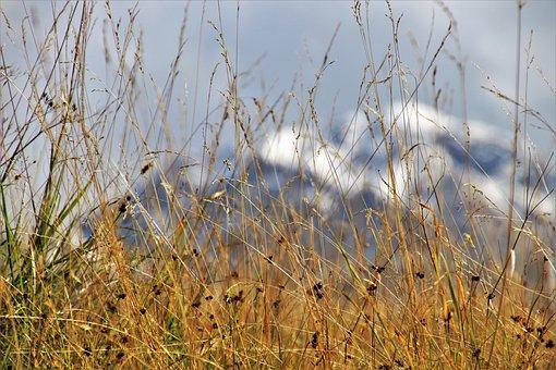 干草, 隐藏, 上衣, 阿尔卑斯山, 景观, 山, 雪, 请参阅, 风景, 田园