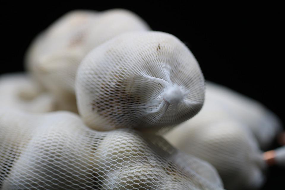 Garlic Stored