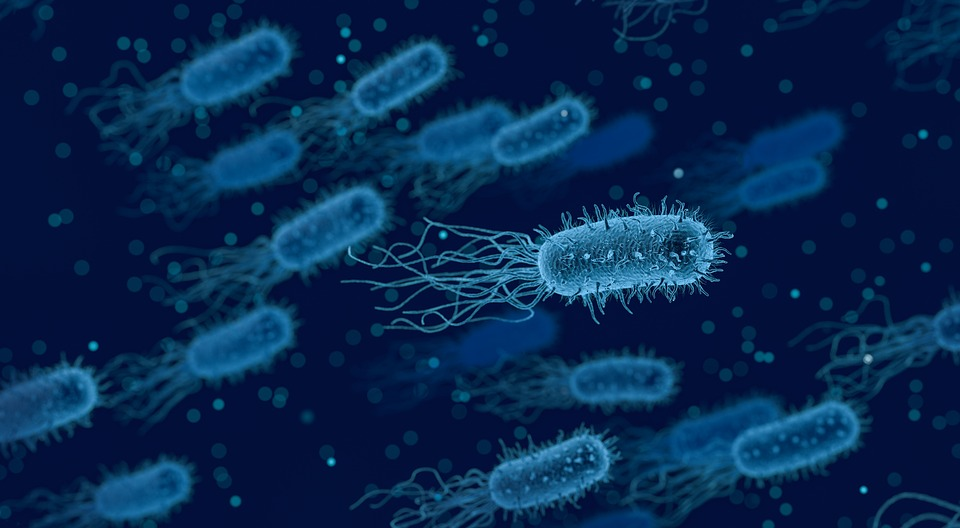 Bacteria Medical Biology - Free image on Pixabay