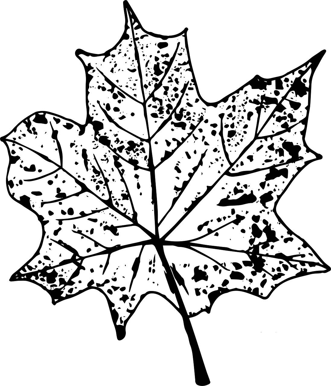 Осенний листик картинки черно белые