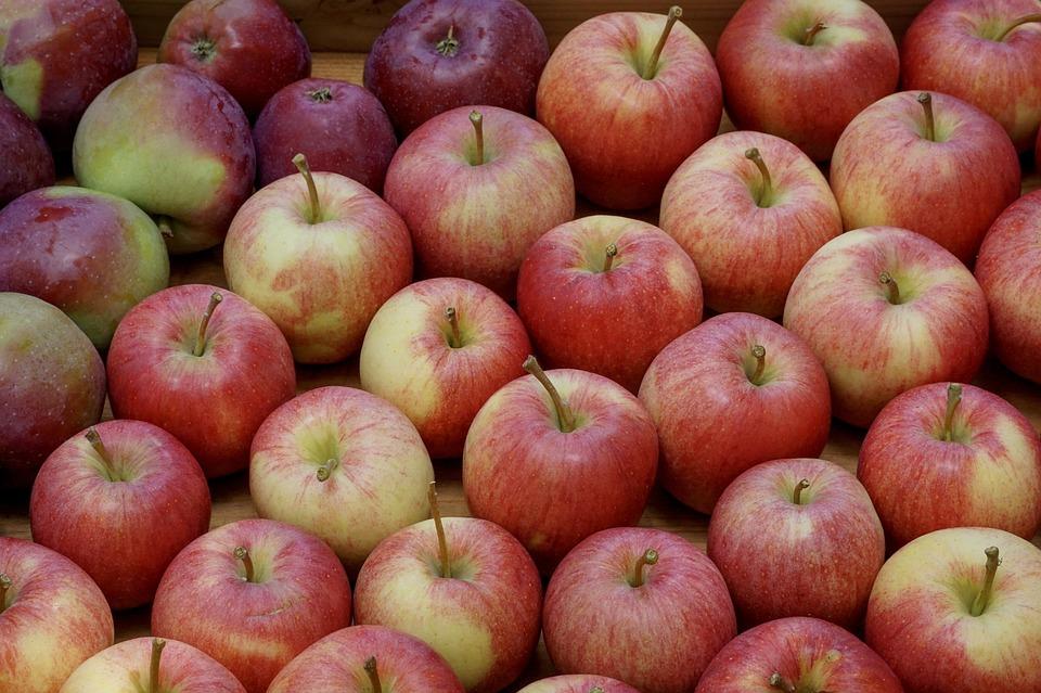 modne frugter