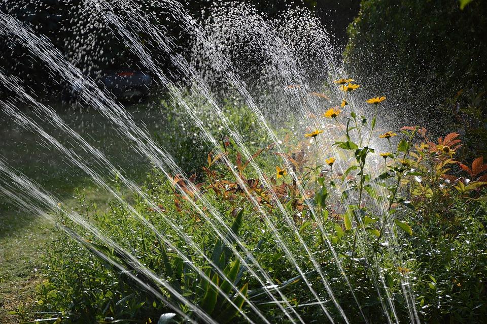 Jardin, Arrosage, L'Irrigation, L'Eau, Arroseur