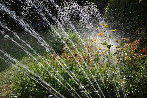 Garden, Irrigation, Water, Sprinkler