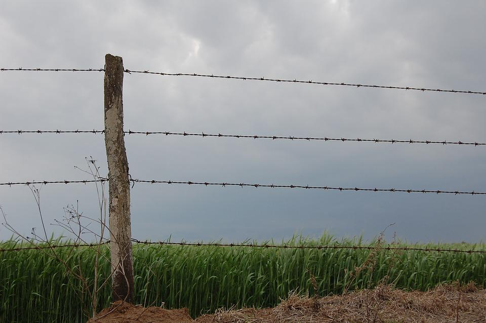 Field Wiring Planting - Free photo on Pixabay on