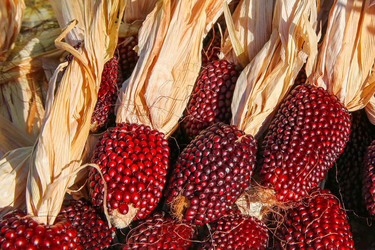 фото земляничной кукурузы если вам просто