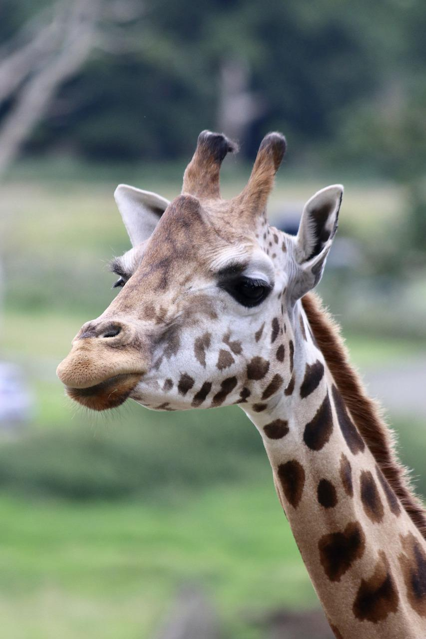 Картинки с приколами жирафы