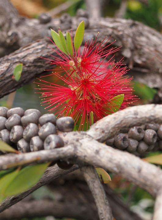 Grande Fleur Jardin Japonais Photo Gratuite Sur Pixabay