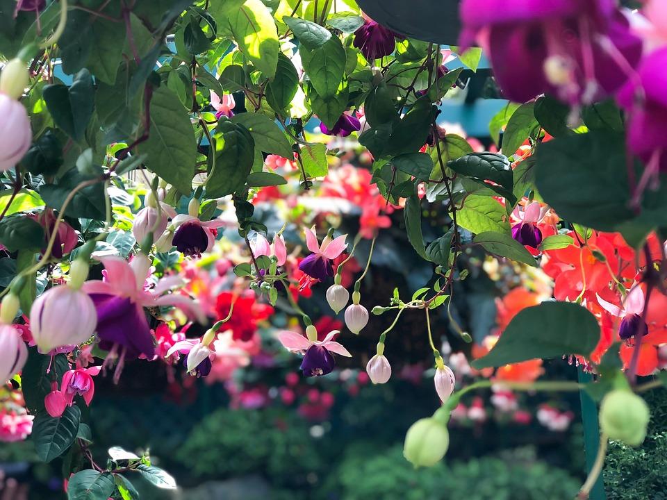 Fiori giardino colorato foto gratis su pixabay