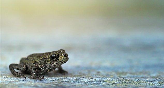 40 Free Frog Background Frog Images Pixabay