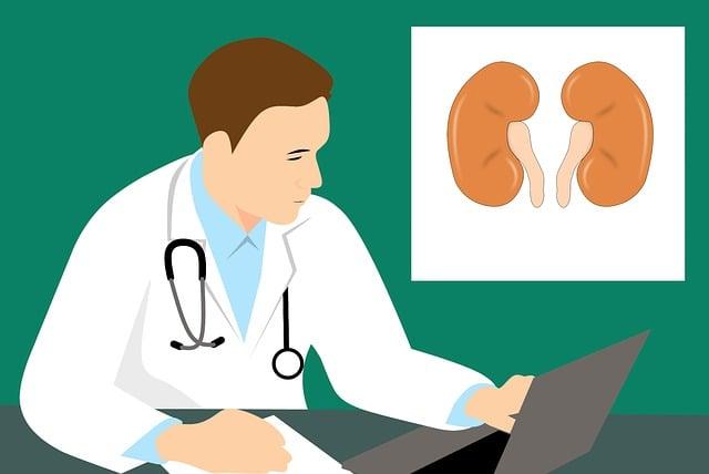 Niere Anatomie Biologie · Kostenloses Bild auf Pixabay