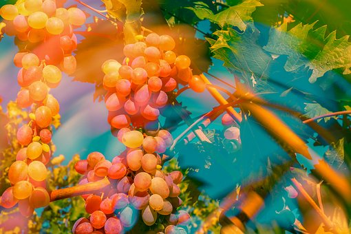 Grapes, Double Exposure, Fruit