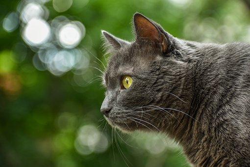 Tier, Katze, Grau, Kätzchen, Gesicht