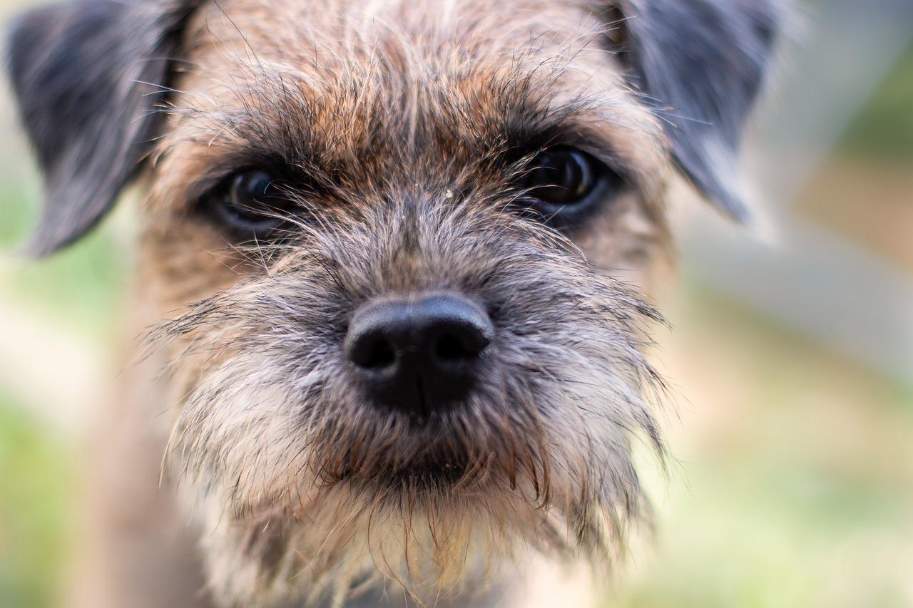 Собаки лица картинки