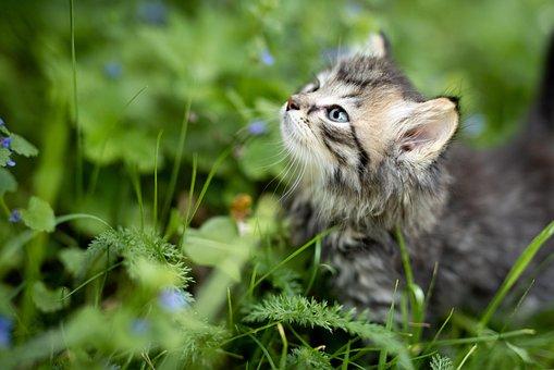 Kätzchen, Tier, Katze, Haustier, Natur
