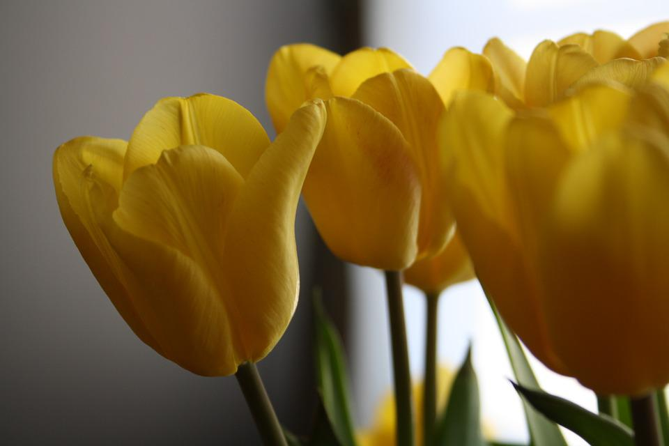 Tulips Easter Flowers Free Photo On Pixabay