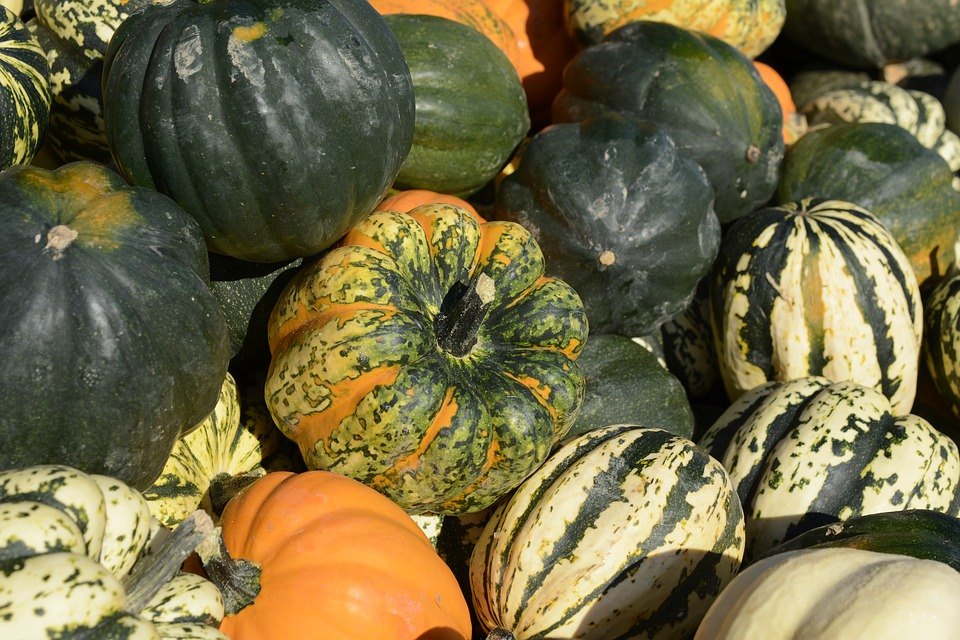Citrouille Gourde Légumes - Photo gratuite sur Pixabay