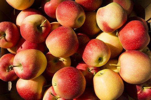 Fruit, Apple, Pommes, Agriculture, Pomme