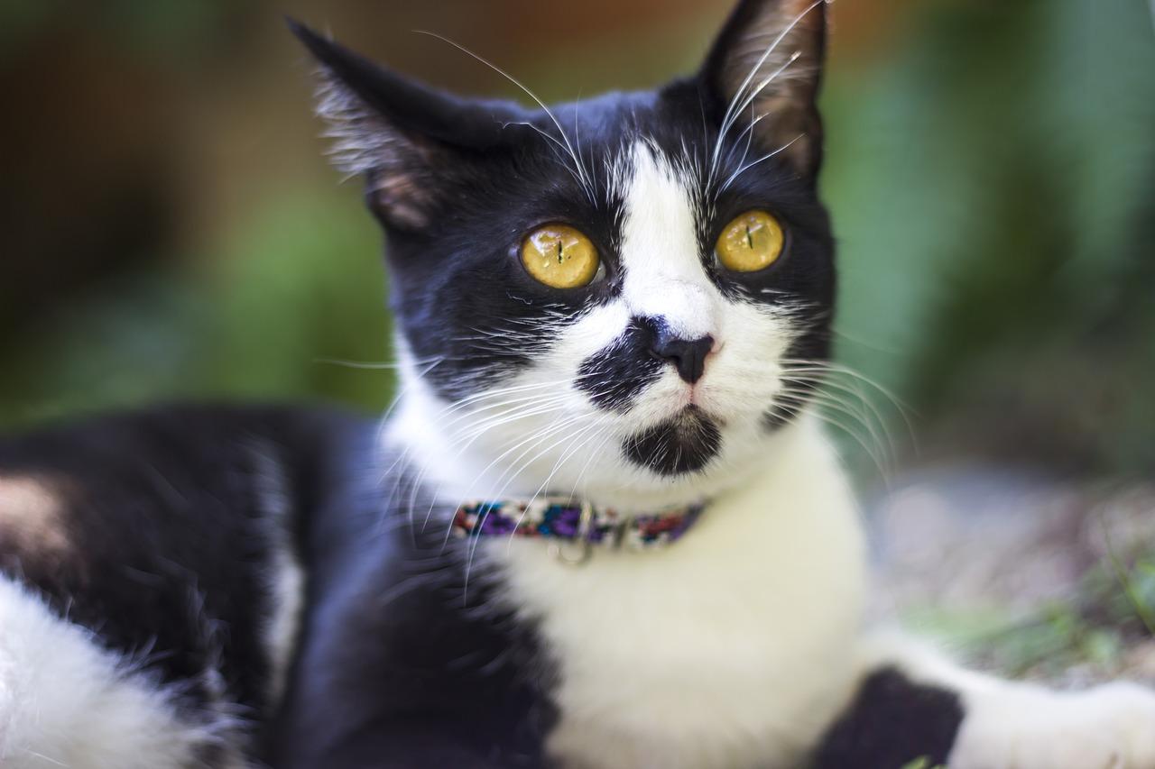 Kat Dier Katten - Gratis foto op Pixabay