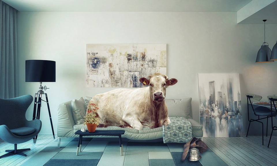Apartment Living Room Sofa Liège Couch Cow Weight
