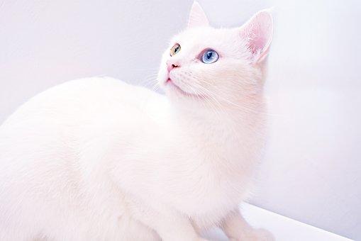 holenie mačička obrázky