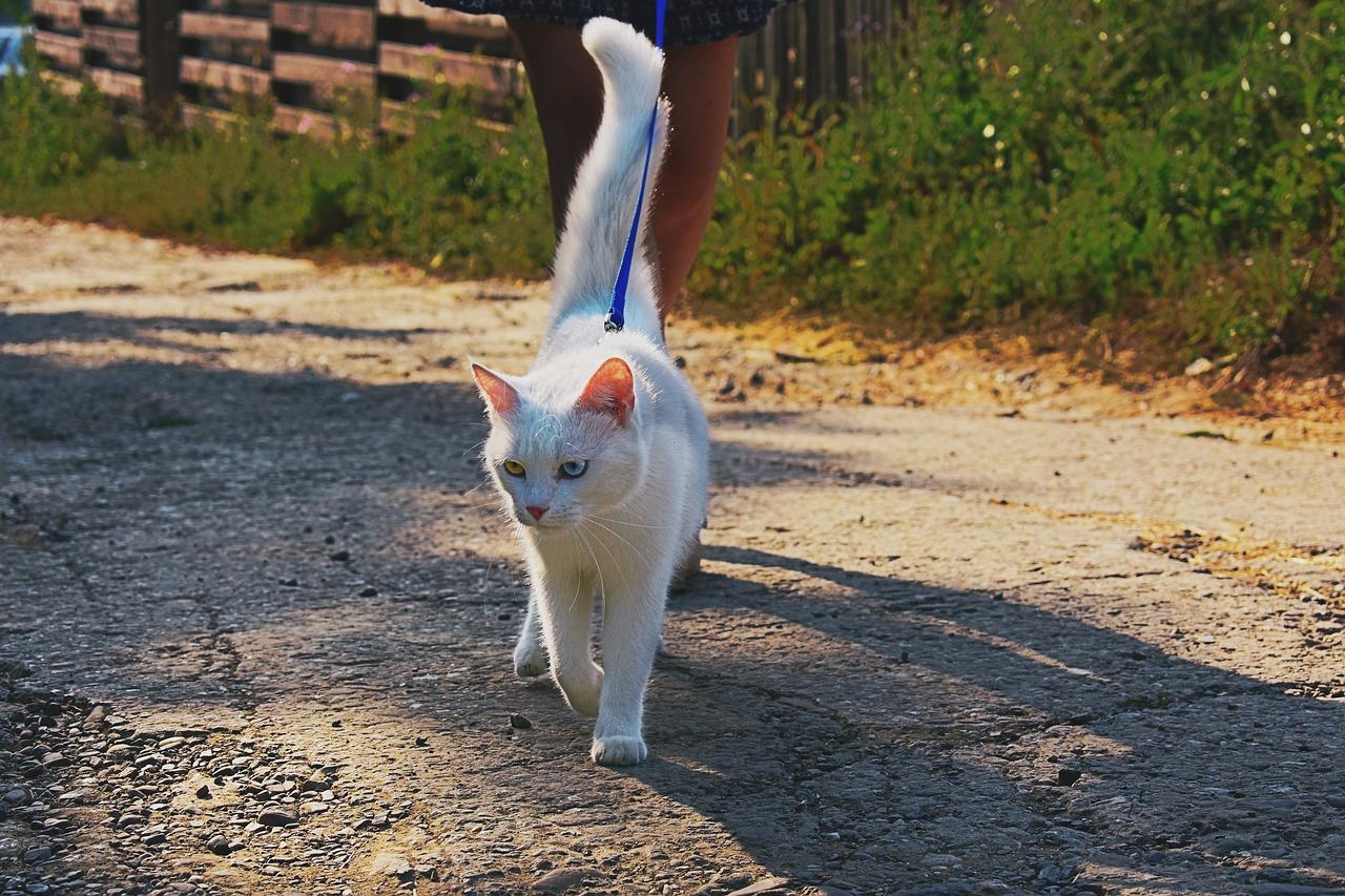Кошки на прогулке картинка