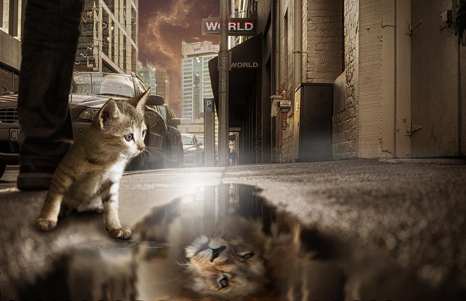 Löwe, Katze, Spiegelbild, Fantasie, Fotomontage