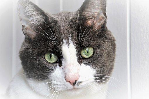 猫, 看看, 眼睛, 小胡子, 外观, 周到, 毛皮, 动物的动物, 一个有趣的