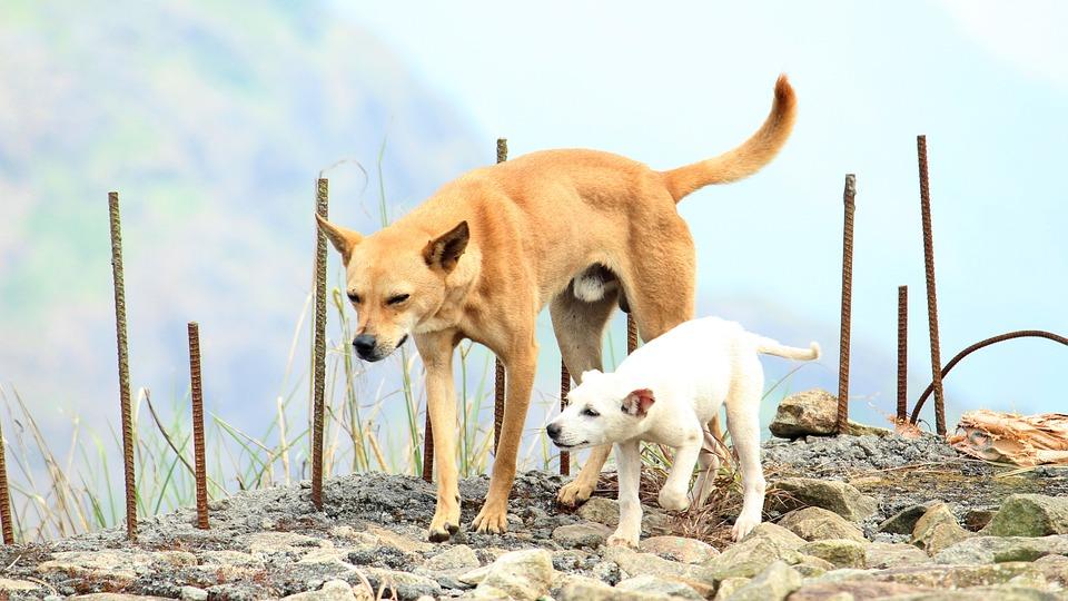 dog canine father free photo on pixabay