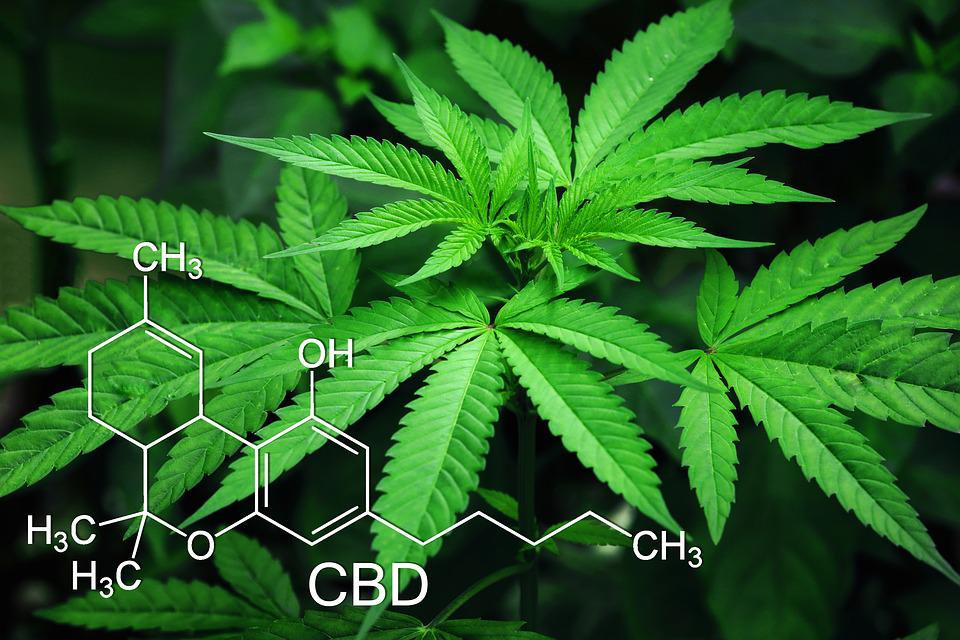Image result for cbd images free