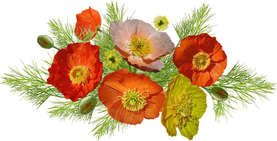 Poppies iceland flowers free photo on pixabay poppies iceland flowers arrangement nature mightylinksfo