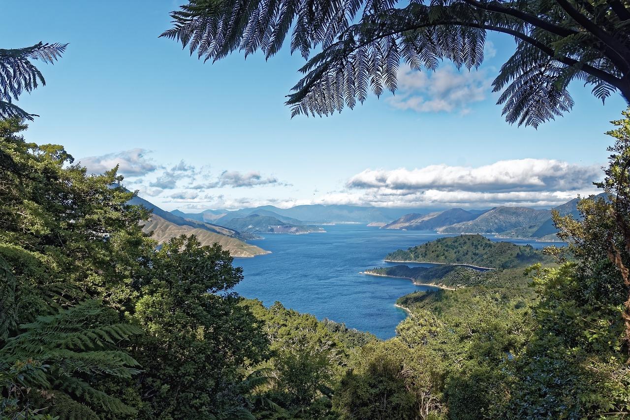 прокуратура начала лес новая зеландия фото известного художника смысл