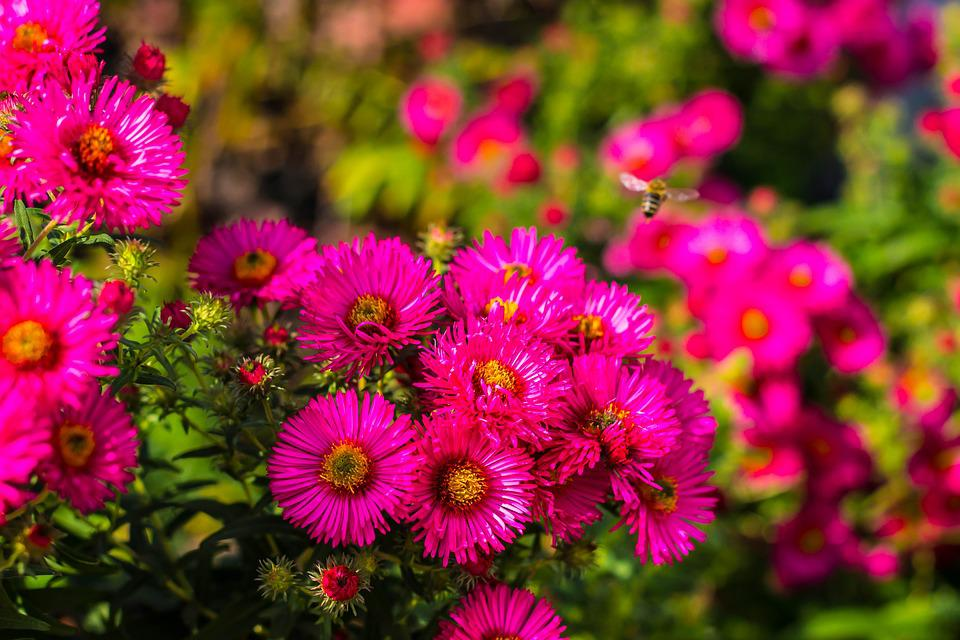 Flowers plant blossom free photo on pixabay flowers plant blossom bloom spring summer garden mightylinksfo