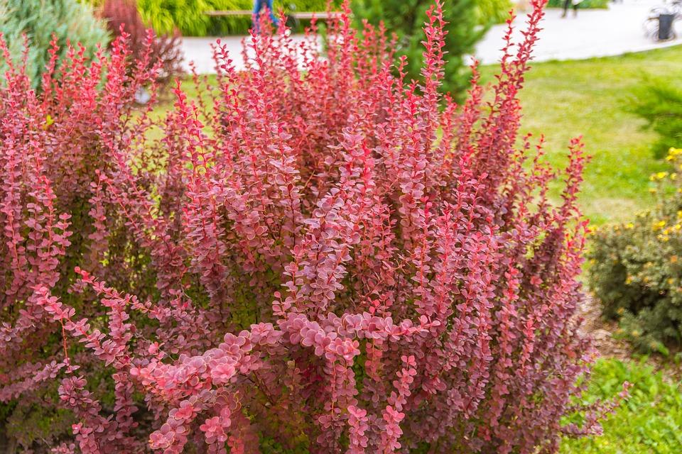 Planten In Tuin : Bloemen planten tuin · gratis foto op pixabay