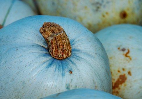 カボチャ, スカッシュ, 野菜, 恩恵を受ける, 収穫時期, 秋, ファーム