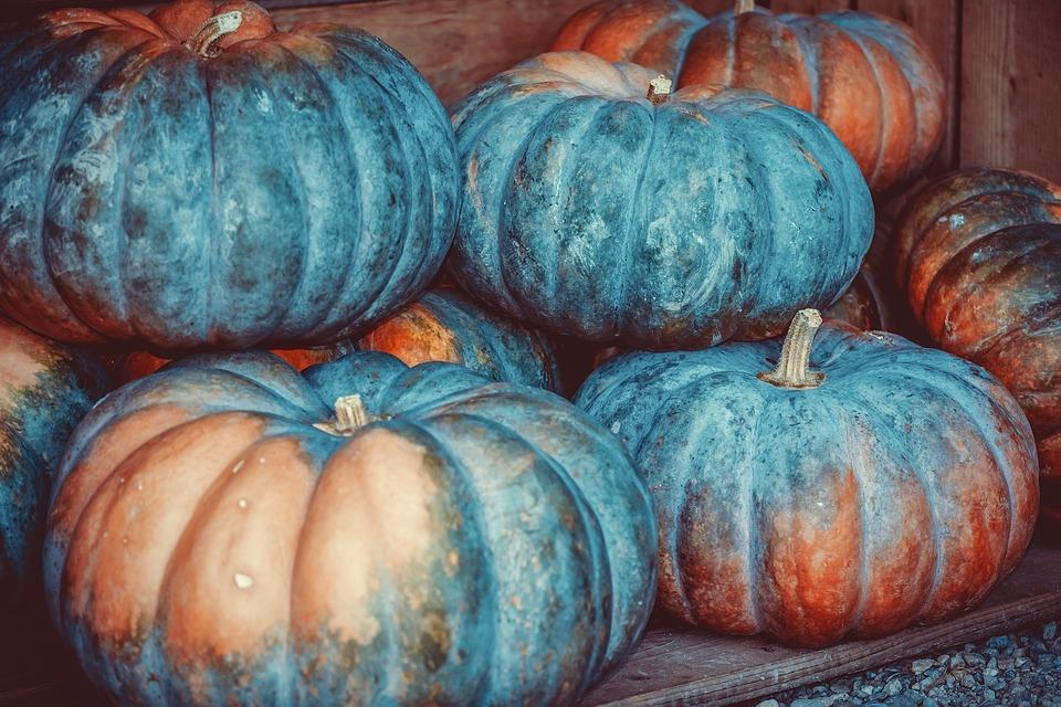 カボチャ, スカッシュ, 野菜, 恩恵を受ける, 食品, ファーム, 販売, 収穫時期, 秋, 9 月, 収穫