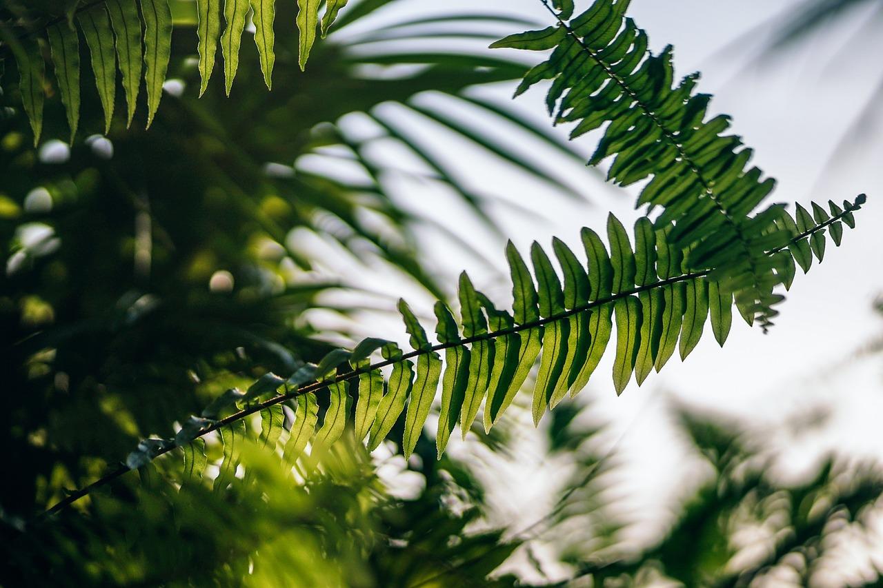 фото папоротники пальмы зрелая красота