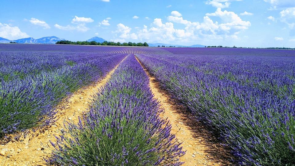Lavendel Fleure Bee Gratis Foto Op Pixabay