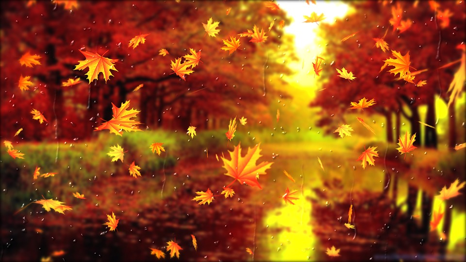 Arkusz, Listopad, Jesień, Koniec, Zimno, Zima, Liście