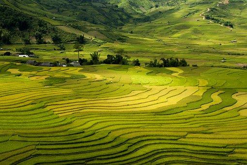 5797cb3b7 LadyAsiaPretty · Terraces, Tay Bac, Vietnam, Sapa
