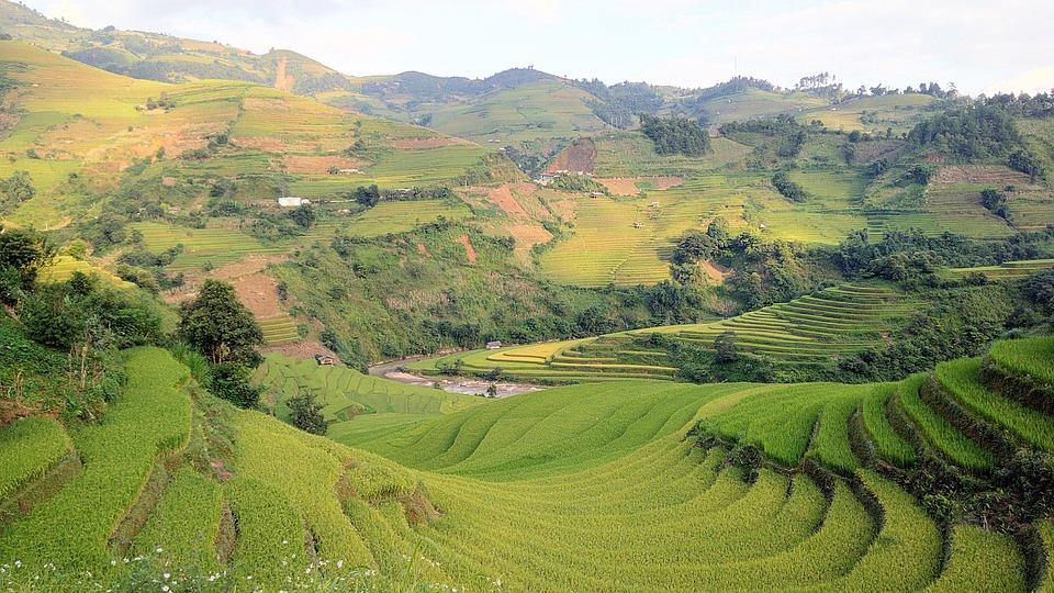 Campo De Arroz Terrazas Montaña Foto Gratis En Pixabay