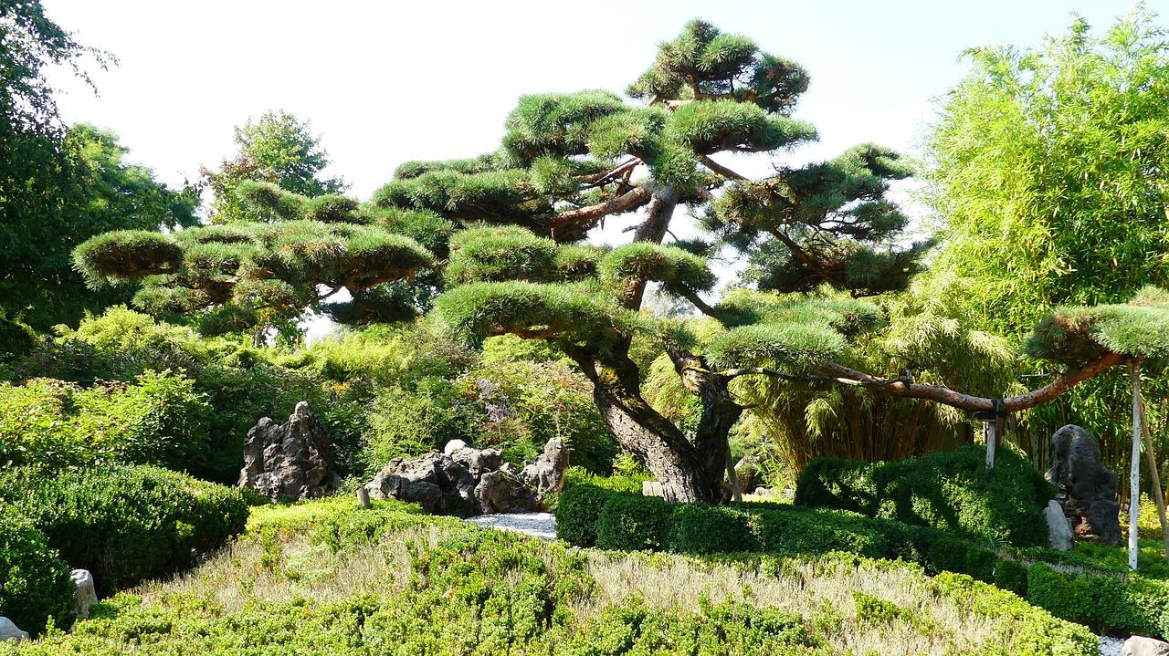 Bonsai Giant Garden Free Photo On Pixabay