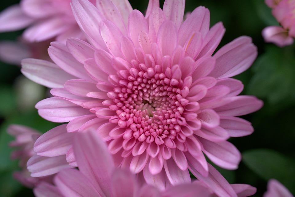 Fleur Jardin L\'Automne De - Photo gratuite sur Pixabay
