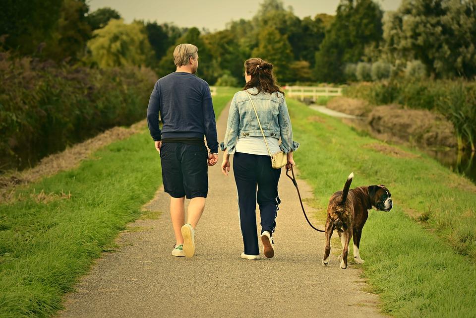 A Dog Walking Between a Couple Can Incite Quarrels