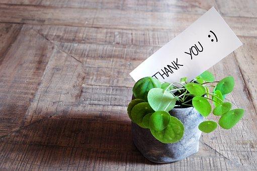 ありがとう, まカード, テーブル, 植物, ポット, モダン, 木製のテーブル