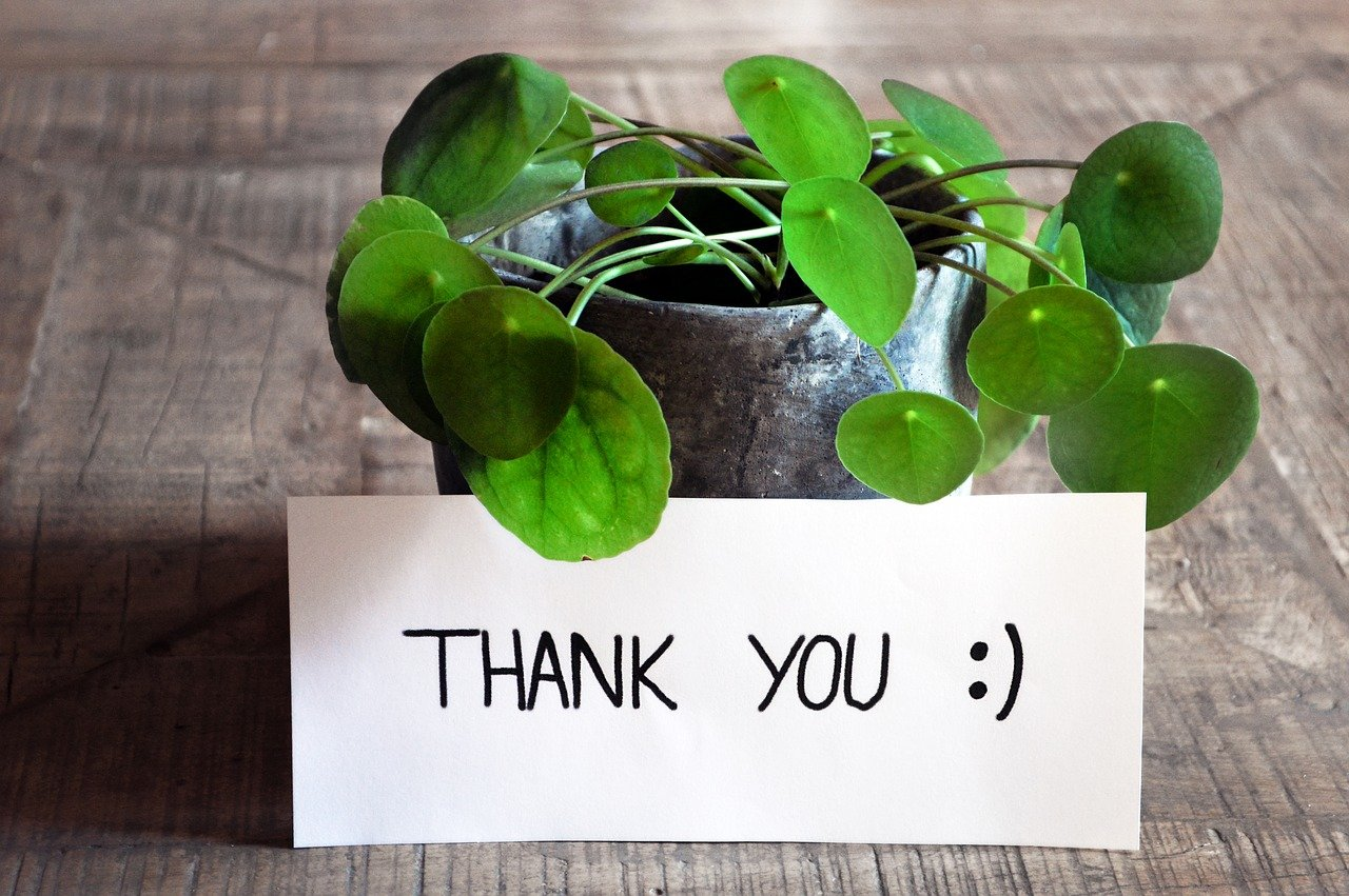 "PLant with ""thank you"" sign"
